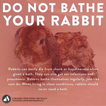 It is not okay to give your bunny a bath, they can go into shock or get very sick. If you keep your rabbit's living area clean, they should never need a bath. IF for some reason, your rabbit absolutely needs one, you should consult your vet to have them do it. Please share this poster.