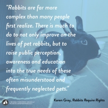 Inspired by the BBC News Article on Rabbits