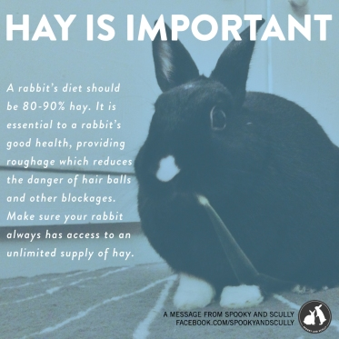 Make sure you always have hay out for your bunnies! Its the most important part of their diet. Adult rabbits need fresh timothy hay, and alfalfa hay is good for growing buns up to 6 months of age, but is too high in calcium and fats for adult buns.