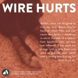 Wire flooring in a rabbit cage is not good for your rabbit's feet. Their feet are delicate and do not have pads on them like dogs or cats do. Long exposures to the wire flooring can cause sore hocks. If you must use a wire cage, please give your rabbit a soft area to rest their paws.